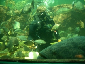 with goliath grouper